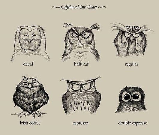 larkspur coffee house owl chart