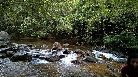 Kanneliya Forest Resort Photo