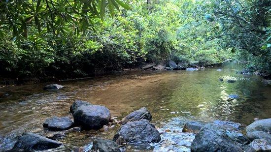 Kanneliya Forest Resort Bild