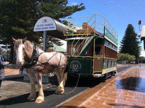 Victor Harbor, Australië: photo2.jpg