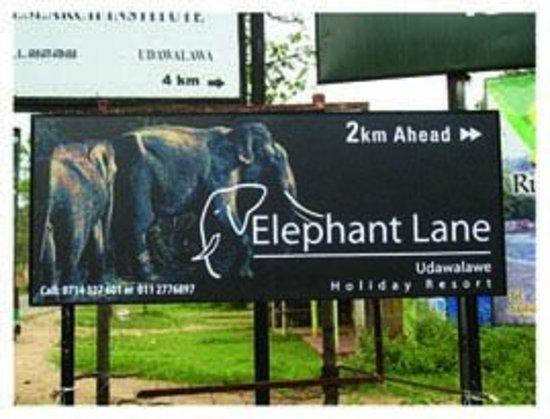 Elephant Lane Photo