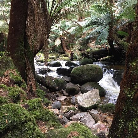St Helens, Australia: Stream on the walk down to the Falls