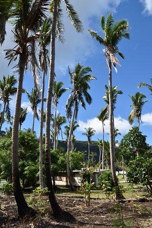 Yasawa Islands, Fiyi: Coconut demo