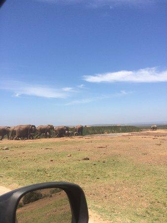 Addo Elephant National Park 사진