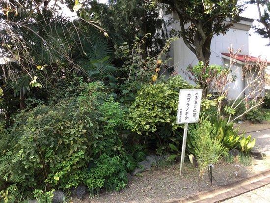 Ebina, Japón: photo3.jpg