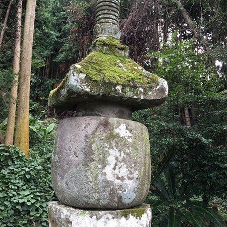 Chogi Family Kunisakito
