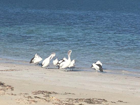 Marion Bay, Австралия: photo0.jpg