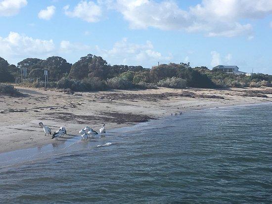 Marion Bay, Австралия: photo1.jpg