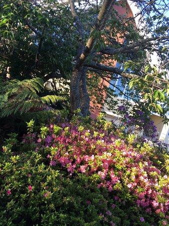 Leura, Australia: Well-maintained resort gardens