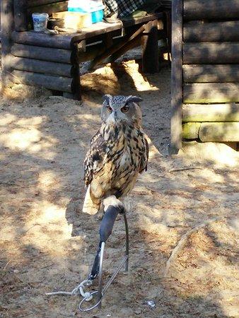 Hoenderloo, Nederland: Roofvogel show op het park