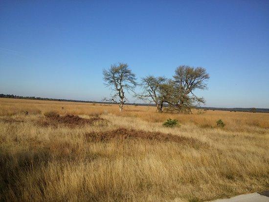 Hoenderloo, Nederland: Natuur