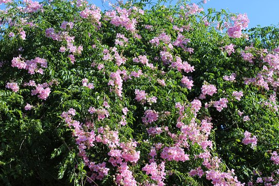 Sant Carles de Peralta, İspanya: fiori