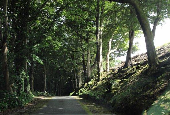 Menai Bridge, UK: Driveway to Cadnant