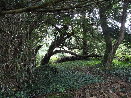 Menai Bridge, UK: Cadnant woods
