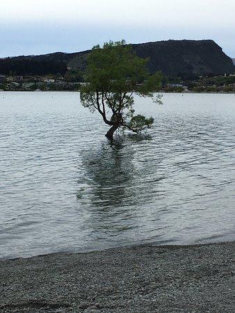 Wanaka, New Zealand: photo3.jpg
