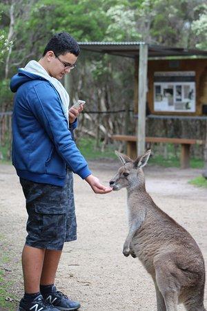 Moonlit Sanctuary Wildlife Conservation Park: Feed the kangaroo