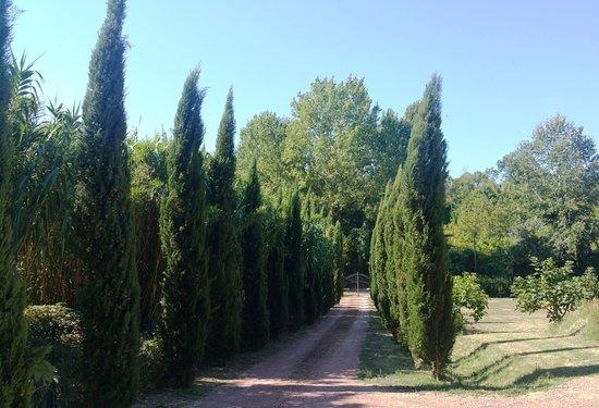 Casciana Terme Lari, Italia: Cypress trees