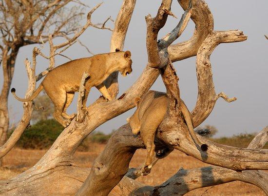Safari - the rhythm of life and death.