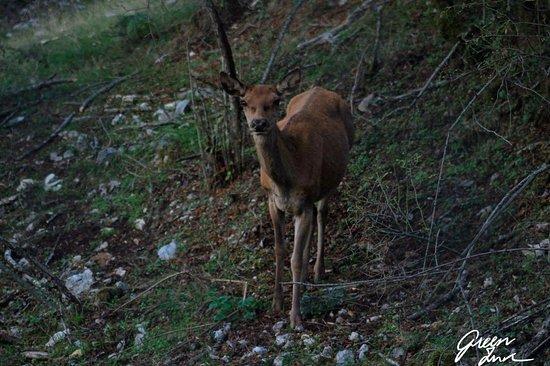 Червара-ди-Рома, Италия: Scattata a pochi metri dal maestoso animale, con il gruppo GreenInk