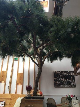 Picture of les pins du moulleau arcachon - Les pins du moulleau ...