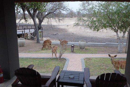 Arathusa Safari Lodge: Nyalas am leeren Wasserloch