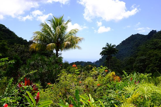 Saint Paul Parish, Dominica: View from the dining area