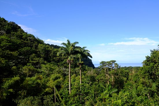 Saint Paul Parish, Dominica: Morning view from our cabin