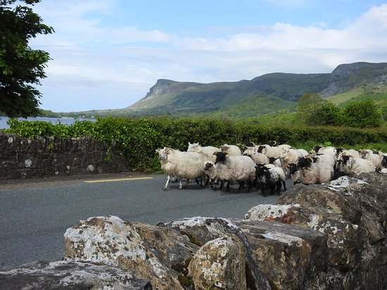 Leitrim, Irlandia: Views near the parking lot