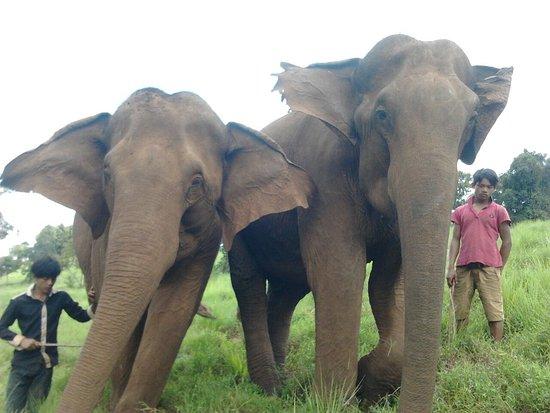 Sen Monorom, Cambogia: Elephant Sanctuary, olifanten met hun mahout
