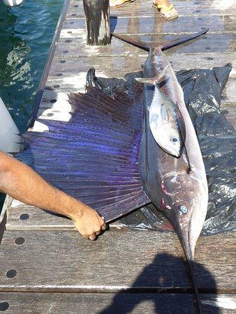Trois-Ilets, มาร์ตินีก: Un petit thon et un beau sailfish.