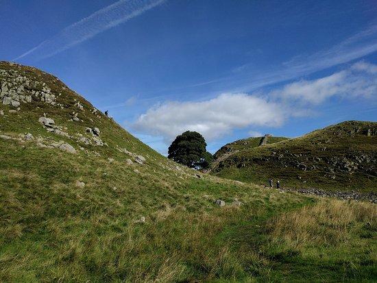 Northumberland, UK: Árvore que apareceu no filme de Robin Hood (com Kevin Costner)
