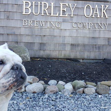 Burley Oak Brewing Company: IMG_20161023_112220_large.jpg