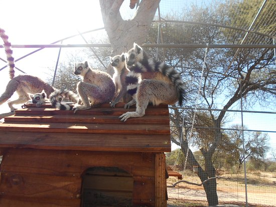 Akwaaba Lodge : Interaction with the Lemurs