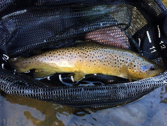 Velarde, NM: Brown Trout