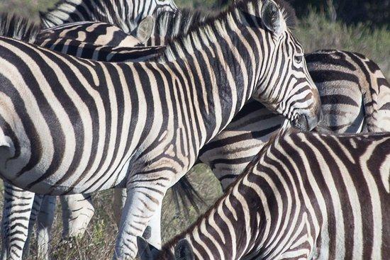 Foto de Amakhala Game Reserve