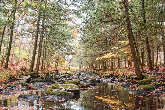 Branchville, NJ: Good fall colors
