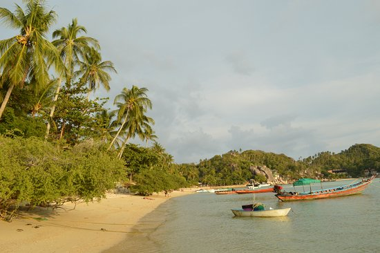 Koh Tao Tropicana Resort: La plage