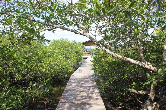 Isla Bastimentos, Panama: Path from dock to grounds