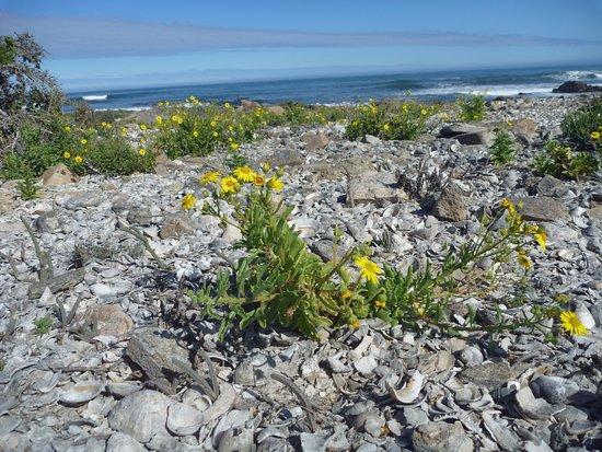 Northern Cape, Südafrika: direkt am Atlantik
