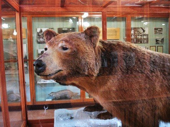 Banff Park Museum Foto