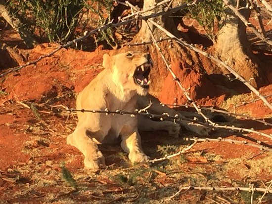 Madikwe Game Reserve, Sudáfrica: game drive