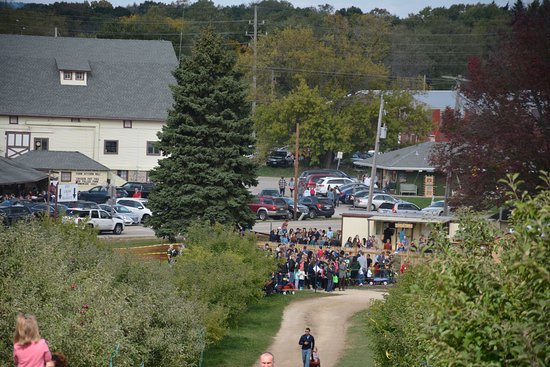 Mukwonago, WI: A view from the top of the hill in the apple orchard