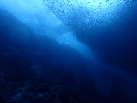 Cebu Fun Divers: Sardinen