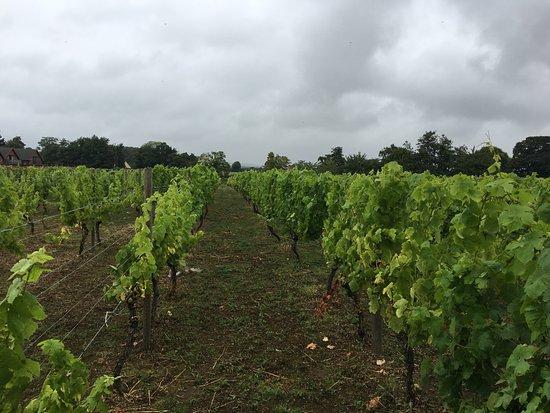 Shrewsbury, UK: The Vineyard