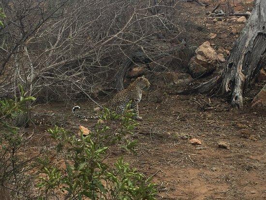 Timbavati Private Nature Reserve, África do Sul: leopard