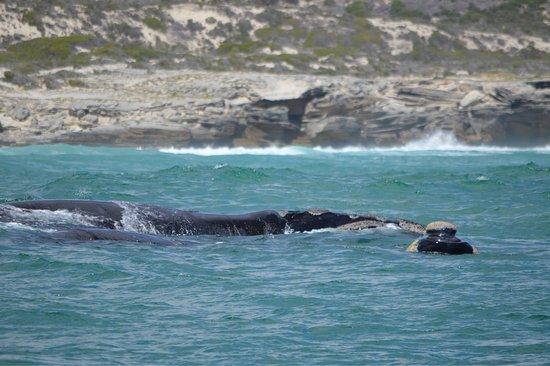 Hermanus, Sudafrica: photo1.jpg