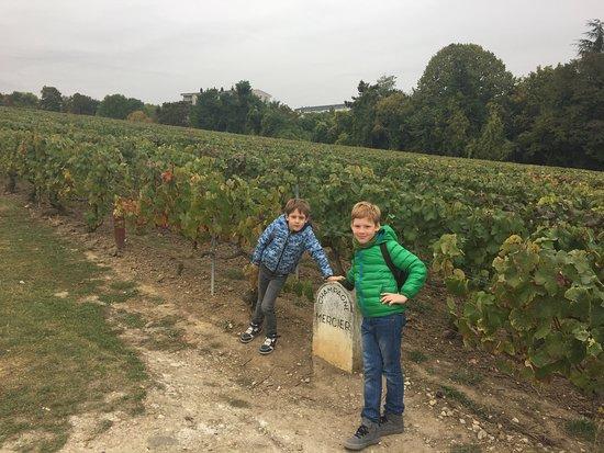 Epernay, Francia: виноградник