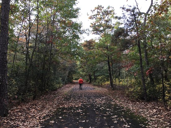 Elmer, NJ: Fall at Parvin State Park