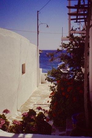 Fiori e colori di Faros