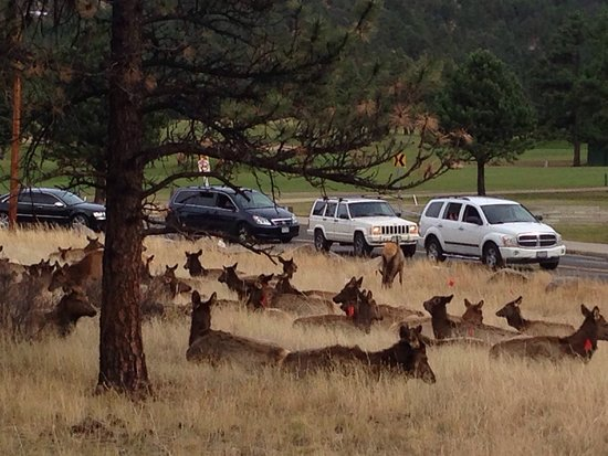 Coyote Mountain Lodge: photo4.jpg